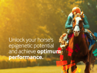 Haaranalyse voor paarden, incl. telefonisch natuurgeneeskundig consult